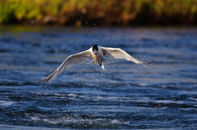 Bức ảnh một chú chim được chụp bằng Tốc độ màn trập nhanh